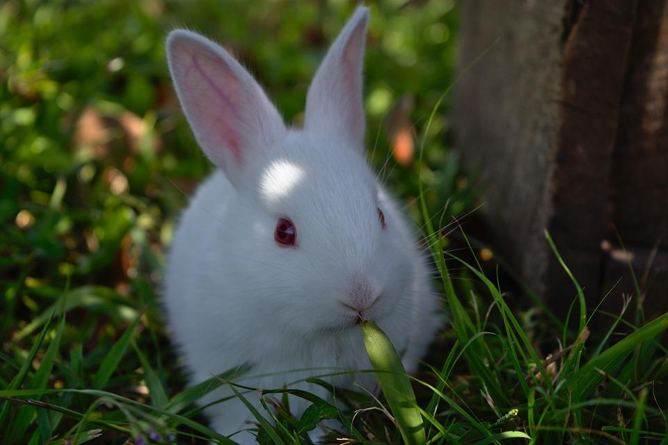 rabbit-3273987_960_720